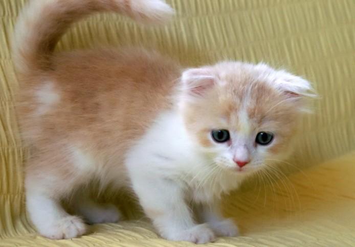 cat_img_1_44939